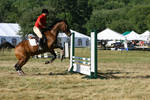 Bay Thoroughbred Hunter/Jumper at show by HorseStockPhotos