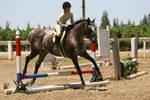 Appaloosa Hunter/Jumper Show Horse
