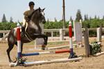 Appaloosa Hunter/Jumper Horse Show