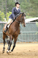 Bay Warmblood Hunter / Equitation Horse Flatwork by HorseStockPhotos