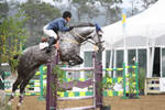 Dapple Gray Warmblood Show Jumping Pebble Beach