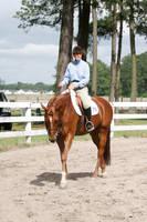 Chestnut Hunter Under Saddle Horse Show by HorseStockPhotos
