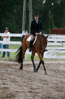 Bay Quarter Horse Gelding Hunter Under Saddle by HorseStockPhotos