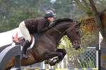 Brown Warmblod Show Jumping Rider Equitation