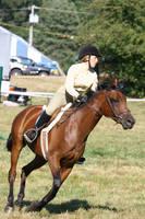 Bay Throughbred Gelding, Hunter, Myopia Horse Show by HorseStockPhotos