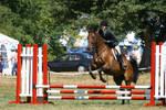 Bay Throughbred Gelding, Hunter, Myopia Horse Show