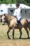 Buckskin Welsh Pony Hunters