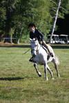 Dapple Gray Welsh Pony Hunter Horse Show