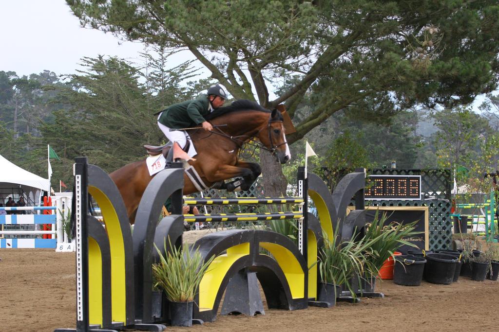 Bay Warmblood Horse - Show Jumping at Pebble Beach by HorseStockPhotos