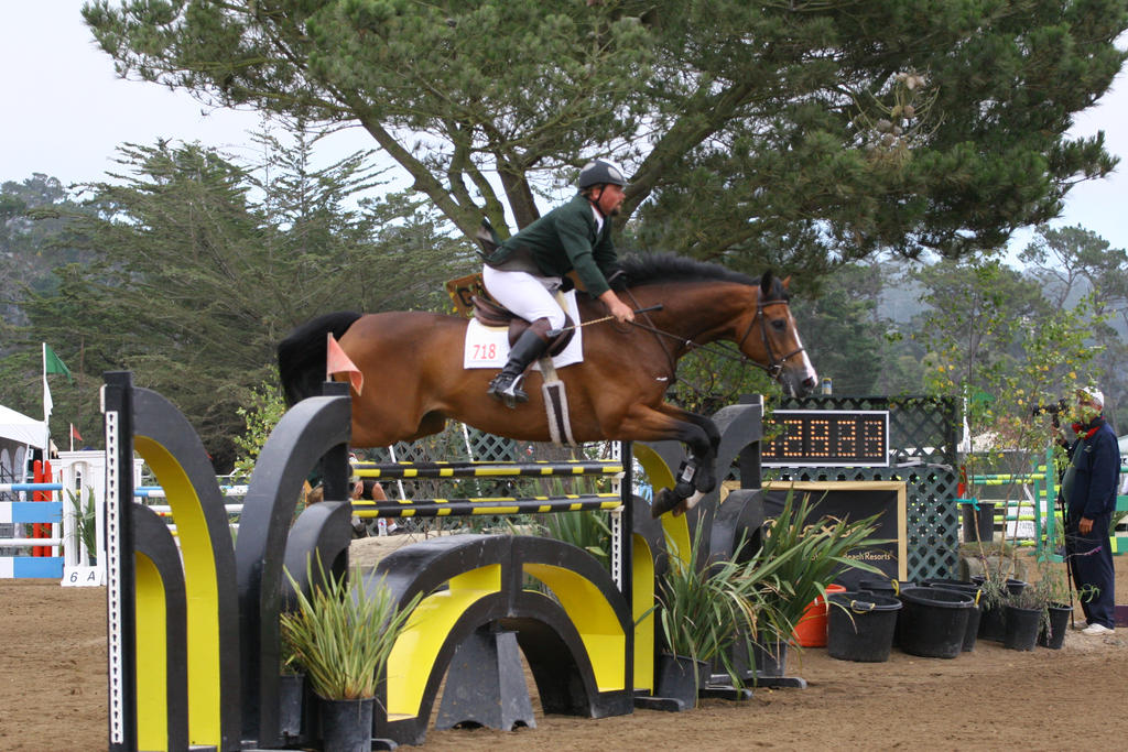 Bay Warmblood Horse - Show Jumping at Pebble Beach by HorseStockPhotos