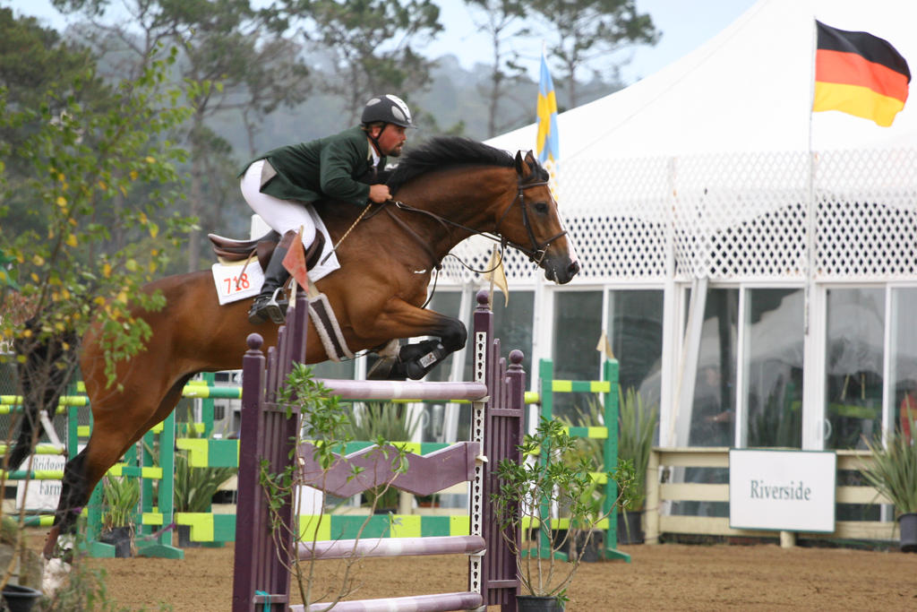 bay horse show - photo #20