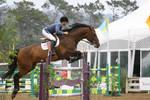 Bay Warmblood Horse - Show Jumping at Pebble Beach