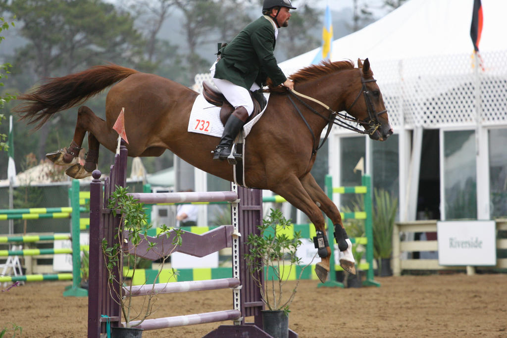 Chestnut Warmblood Show Jumping at Pebble Beach by HorseStockPhotos