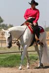 Gray White Quarter Horse Western Pleasure