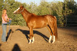 Chestnut Thoroughbred Horse Funny Blooper Shot