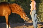 Thoroughbred Mare Blooper - Crazy Mane Shake Hair by HorseStockPhotos
