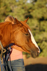 Horse Headshot Chestnut Thoroughbred Mare Stock