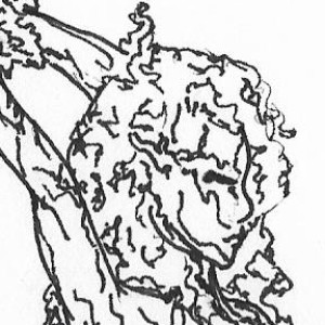LyrebirdTree's Profile Picture