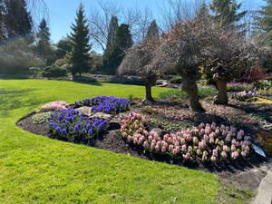 Spring blooms at Queen Elizabeth Park, Vancouver