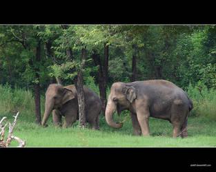 Elephants Dream by abart