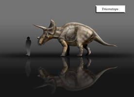 Triceratops... by unlobogris