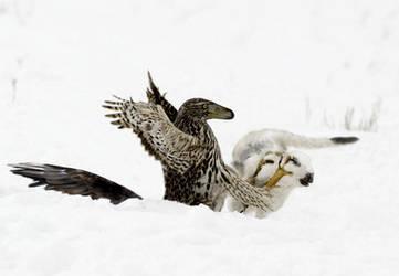 Raptor attack by unlobogris