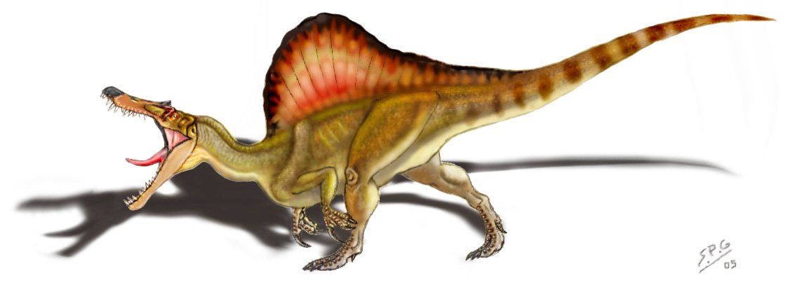 Spinosaurus aegyptiacus by unlobogris