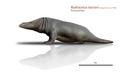 Hippo-seal
