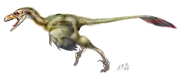 Bambiraptor feinbergorum