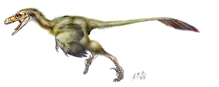 Bambiraptor feinbergorum by unlobogris