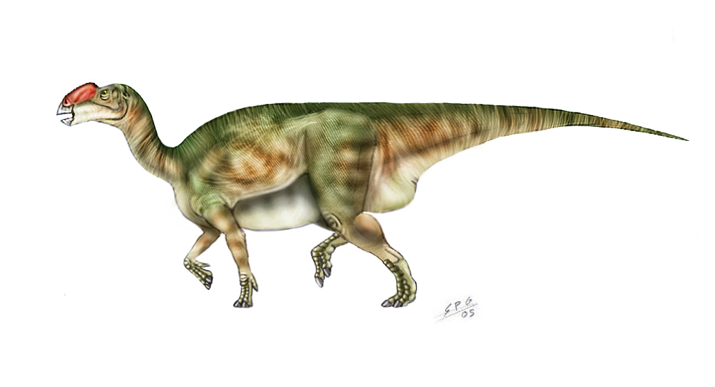 Muttaburrasaurus langdoni by unlobogris