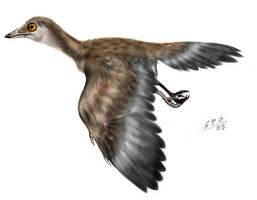 Iberomesornis romerali by unlobogris