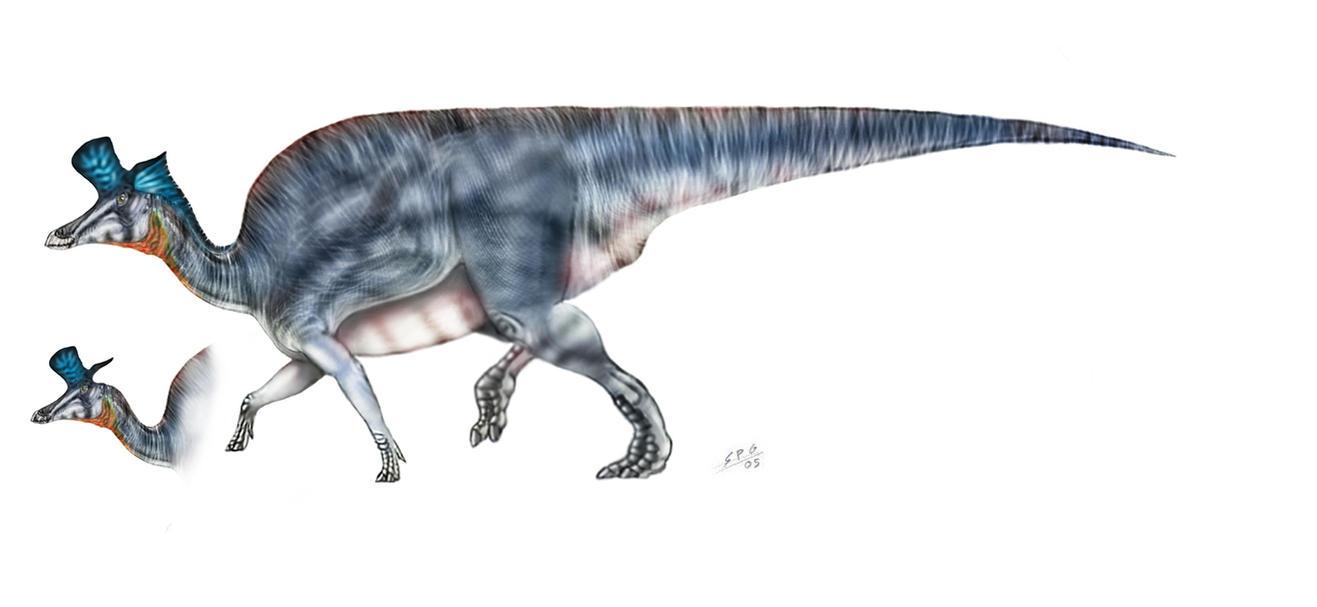 Lambeosaurus_lambei_by_unlobogris.jpg