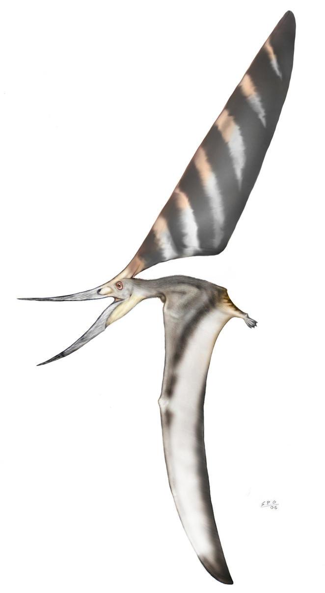 nyctosaurus gracilis by unlobogris on deviantart