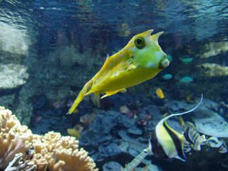 Alien fish by unlobogris