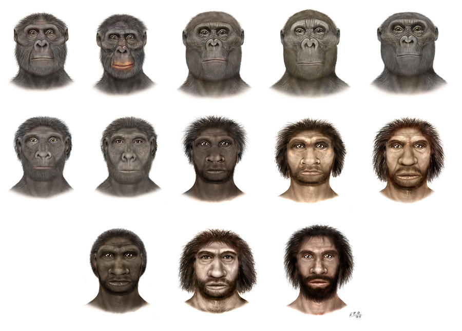 defining the characteristics of hominids