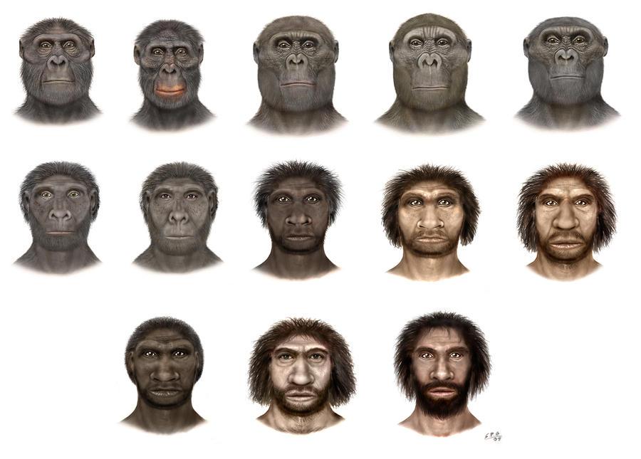 Hominidae; Apes; Hominids; Hominins; Homo