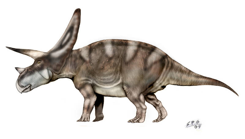 Torosaurus by unlobogris