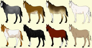 20 Point Horse Adopts OPEN