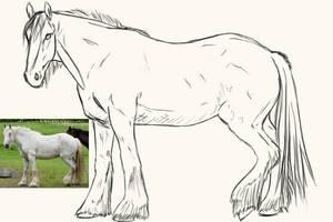 Horse Sketch by lionsilverwolf