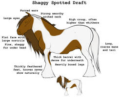 Shaggy Spotted Draft Conformation by lionsilverwolf