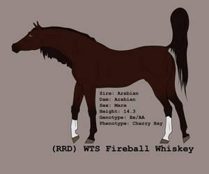 (RRD) WTS Fireball Whiskey by lionsilverwolf