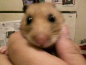 Mike the Hamster