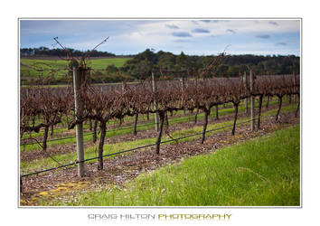 Winter Vines by purplepawn