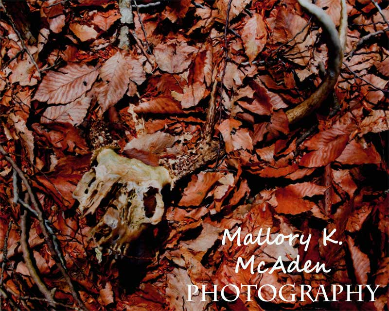 Mallory K. McAden Photography by depthsofpysche321