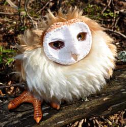 Barn owl by MissEisuke