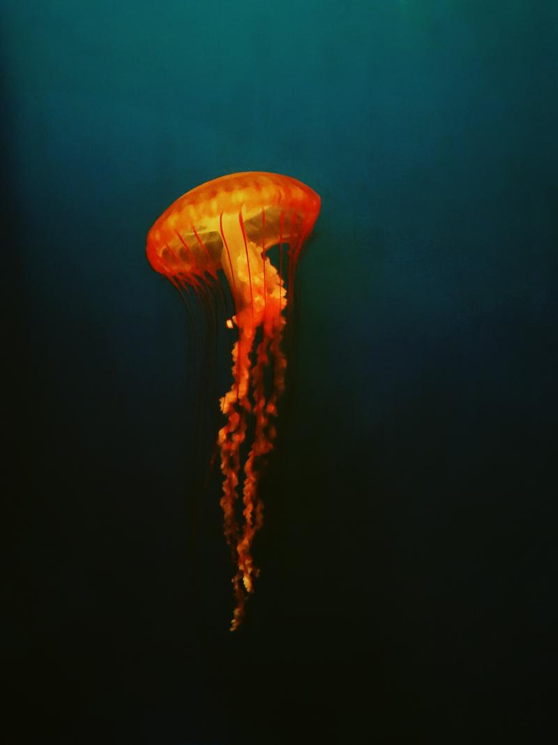 LondonJellyFish by DDabug
