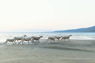 rapske ovce by ssv