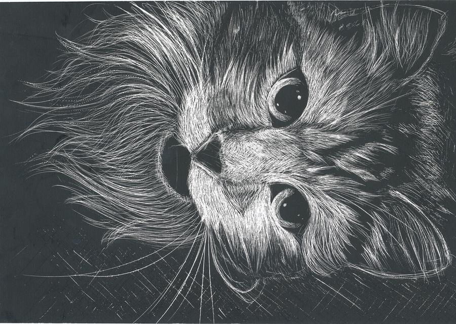 Scratchboard Cat By Singingcatzz