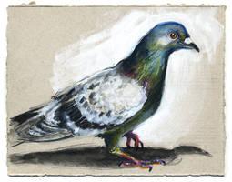 Pigeon 01 by nuances-curieuses